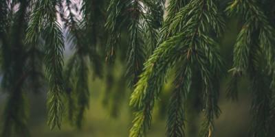 Tree Life Farms Inventory